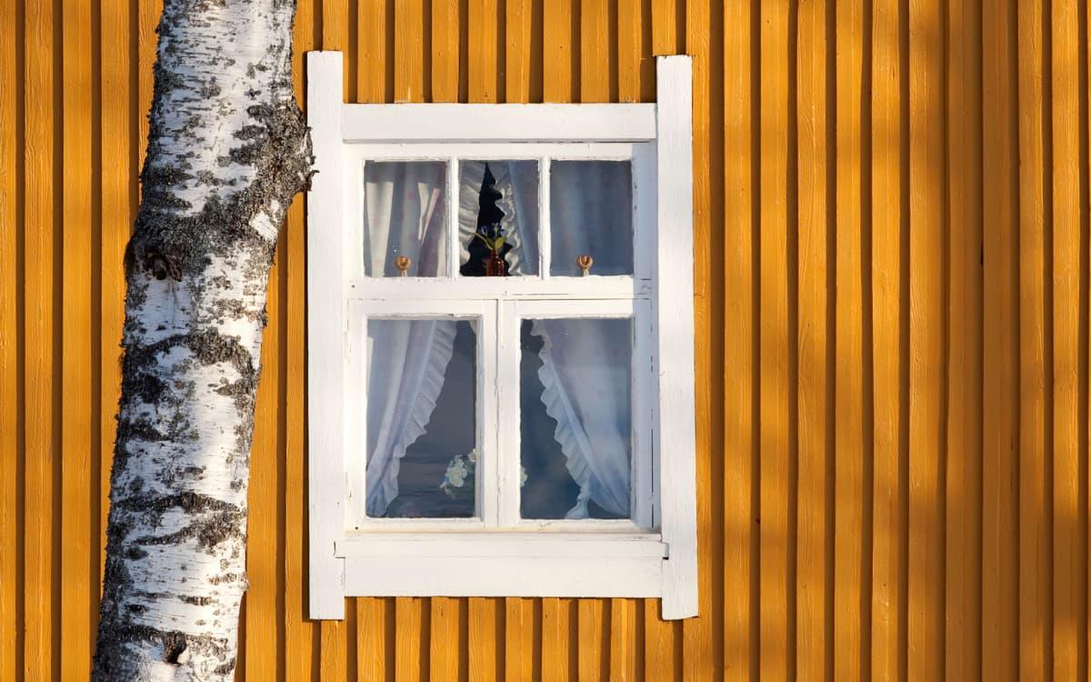 puutalon ikkuna ja koivun runko