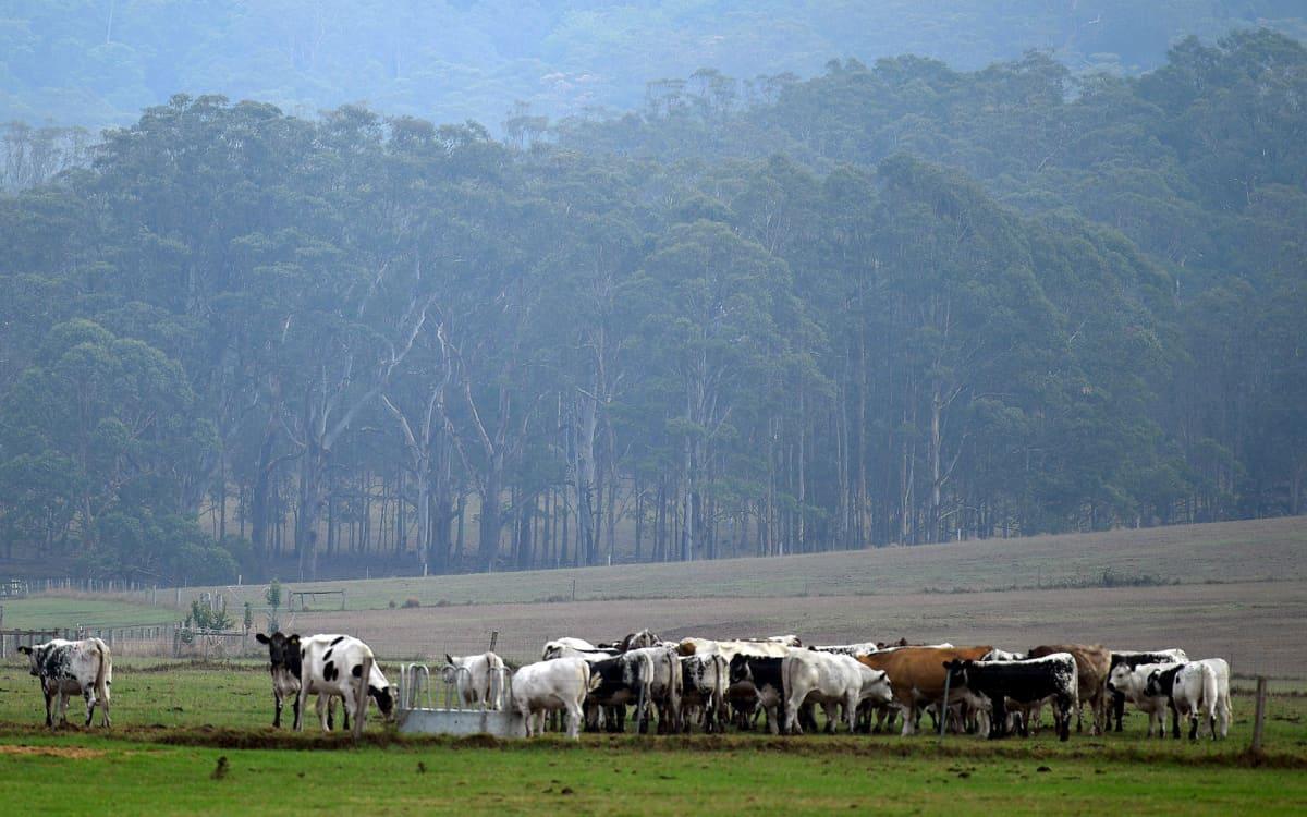 Nowran kaupungin lähellä satoi Uudessa Etelä-Walesissa torstaina.