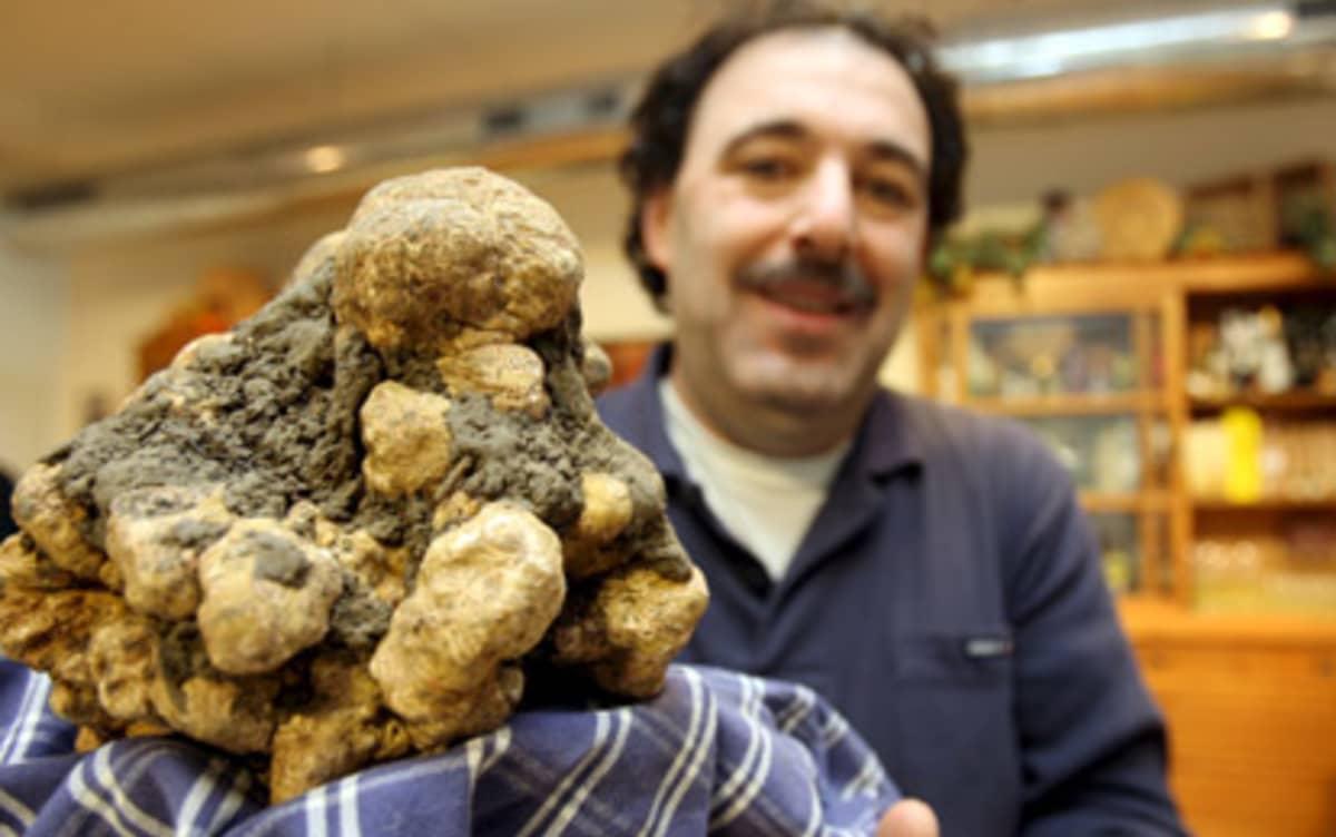 Jättitryffelin löytäneen Cristiano savinin isä Luciano Savini esittelee omaa sientään