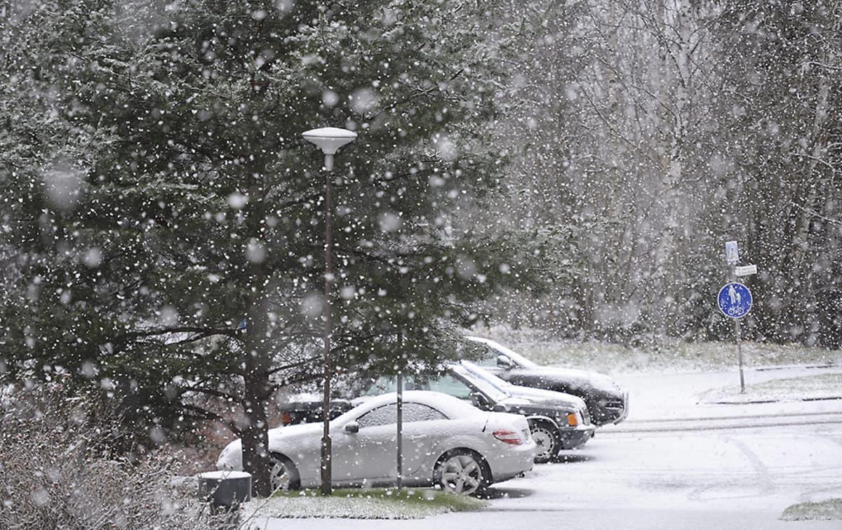Lunta sataa parkkipaikalla olevien autojen päälle Suvelassa Espoossa.