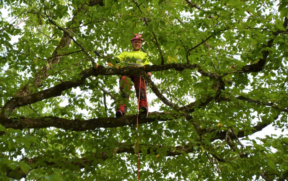 Sedun Ähtärin toimipisteen opiskelija puussa