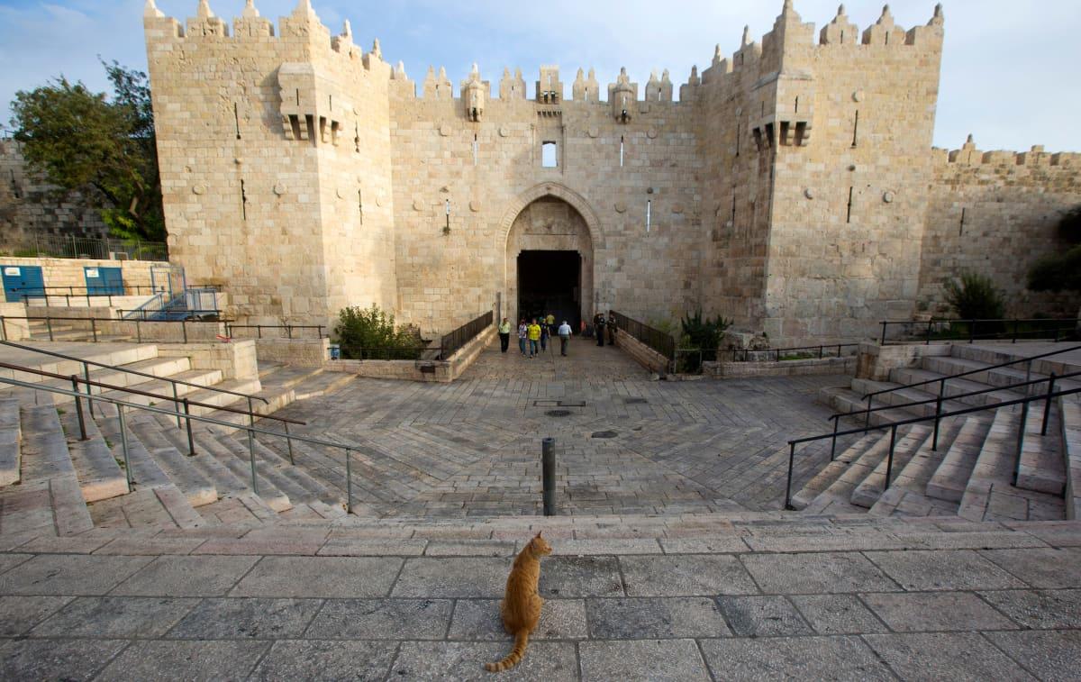 Kissa istumassa kadulla Jerusalemissa. Taustalla portti.