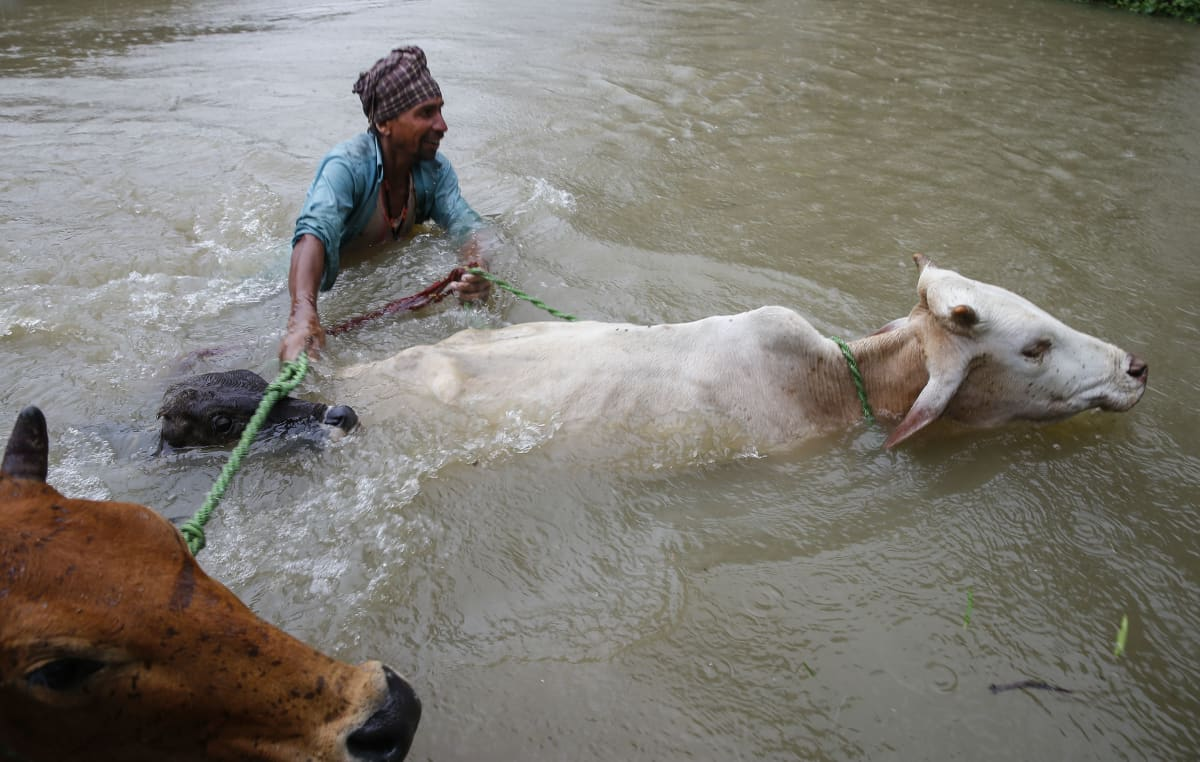 Maanviljelijä ylittää tulvavirtaa Saptarin piirikunnassa Nepalissa.
