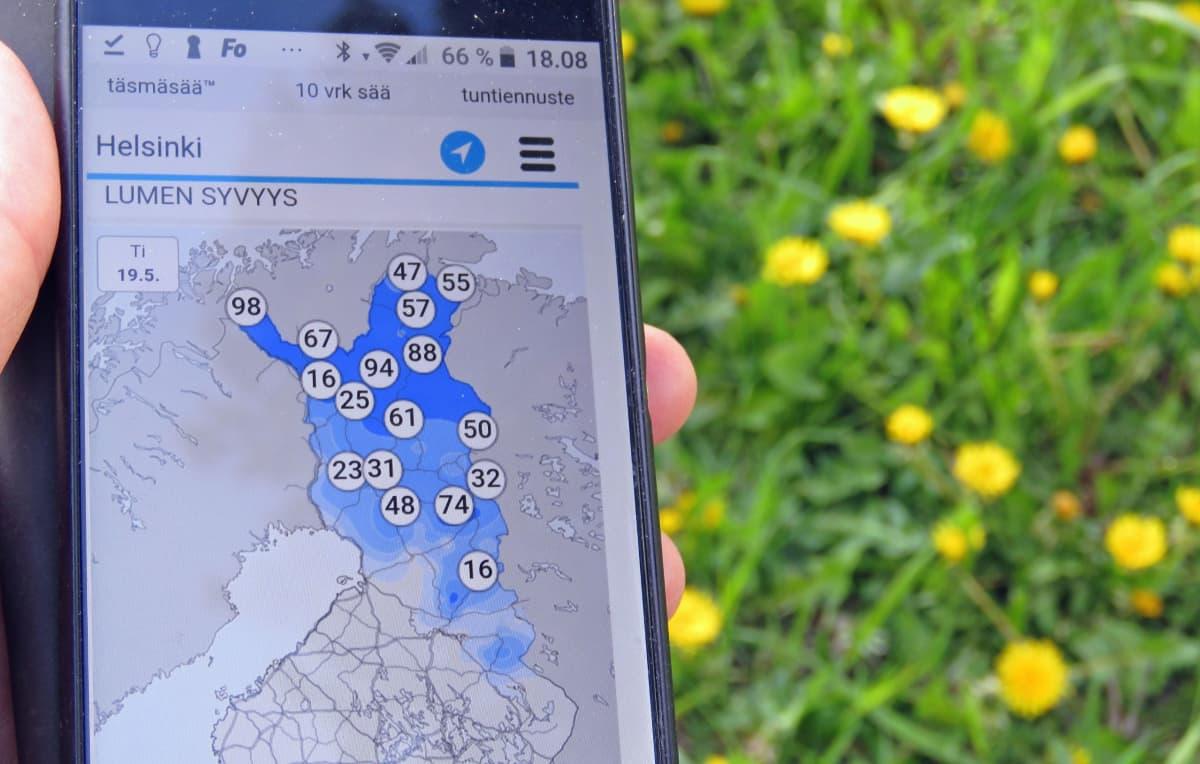 Kännykässä auki kartta, joka kertoo lumen syvyydestä eri puolilla Suomea. Takana näkyy nurmea ja voikukkia.