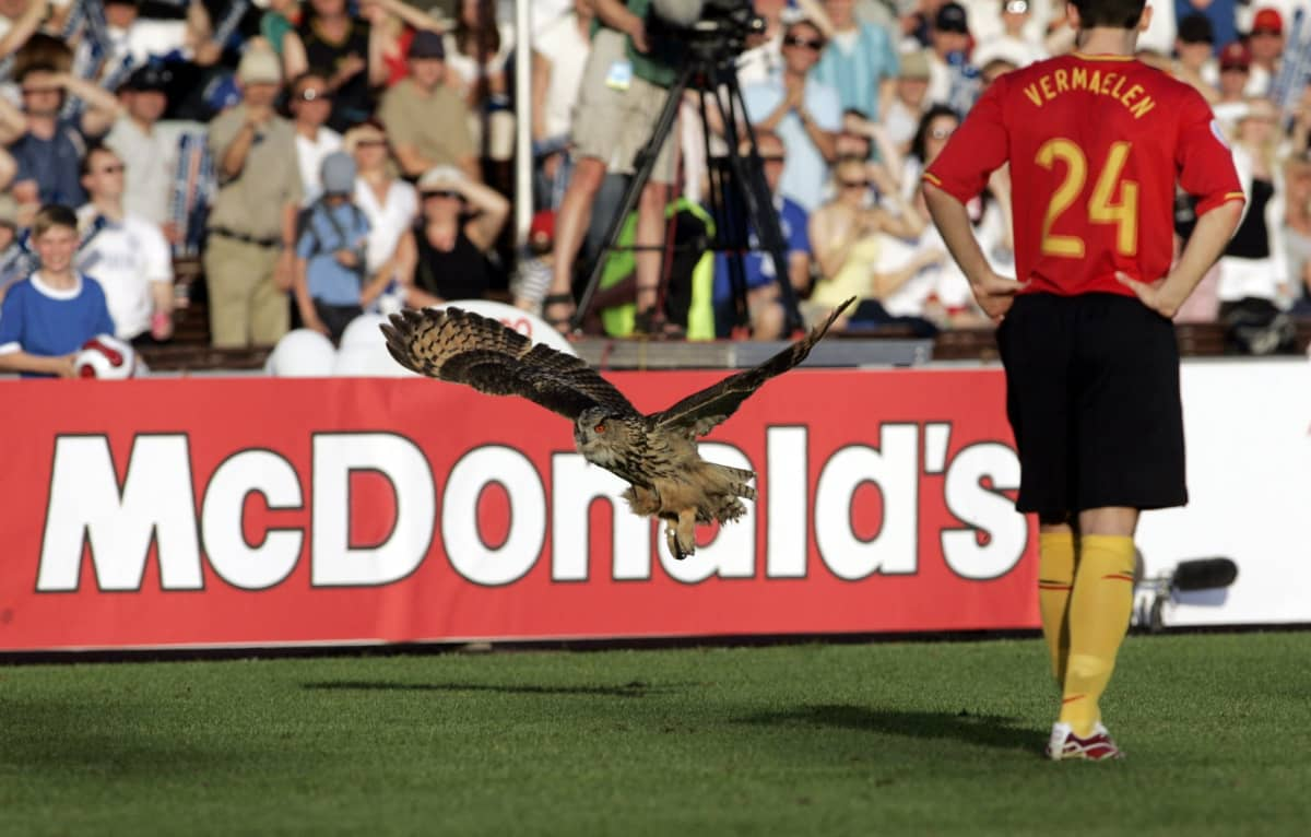 Huuhkaja lensi kentälle Suomen ja Belgian ottelussa Helsingissä 6.6.2007.