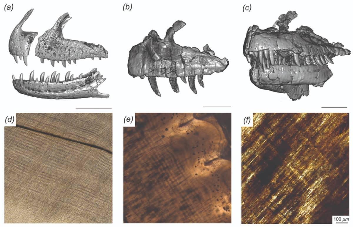 Kolme 3D-kuvaa leuasta ja kolme mikroskooppikuvaa hampaisen uurteista ja koloista.