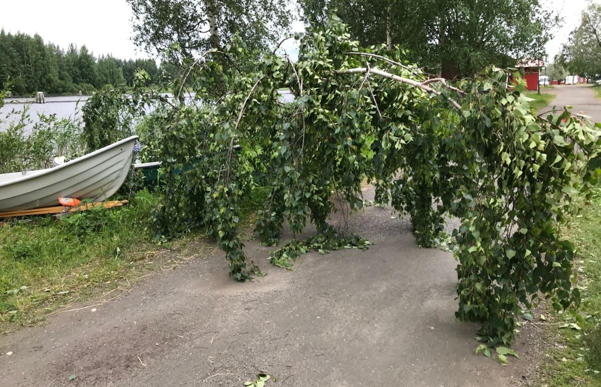 Päivö-myrskyn ulkoilureitille kaatama puu Joensuussa.