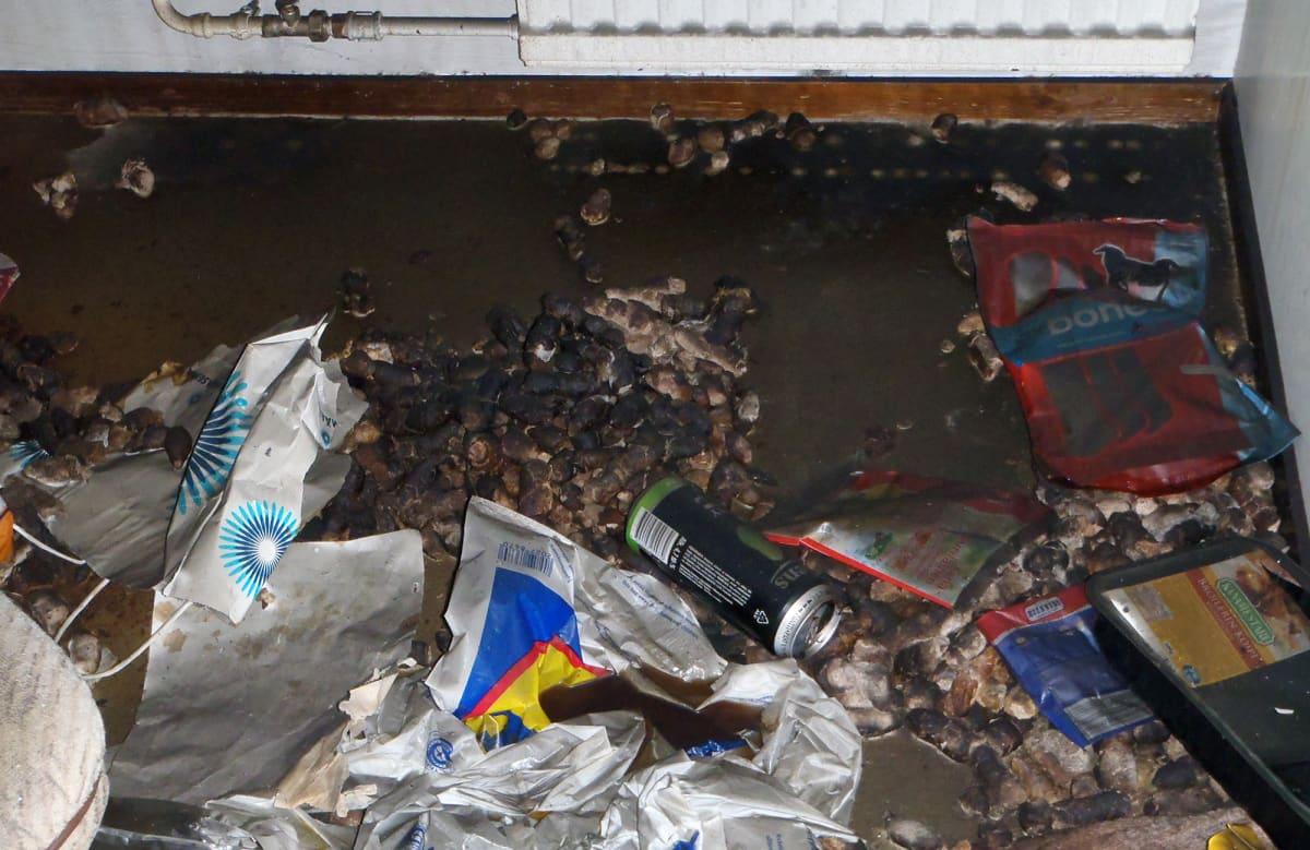 Koiran ulosteita, muoviroskia ja tyhjä siideritölkki asuinhuoneiston lattialla.