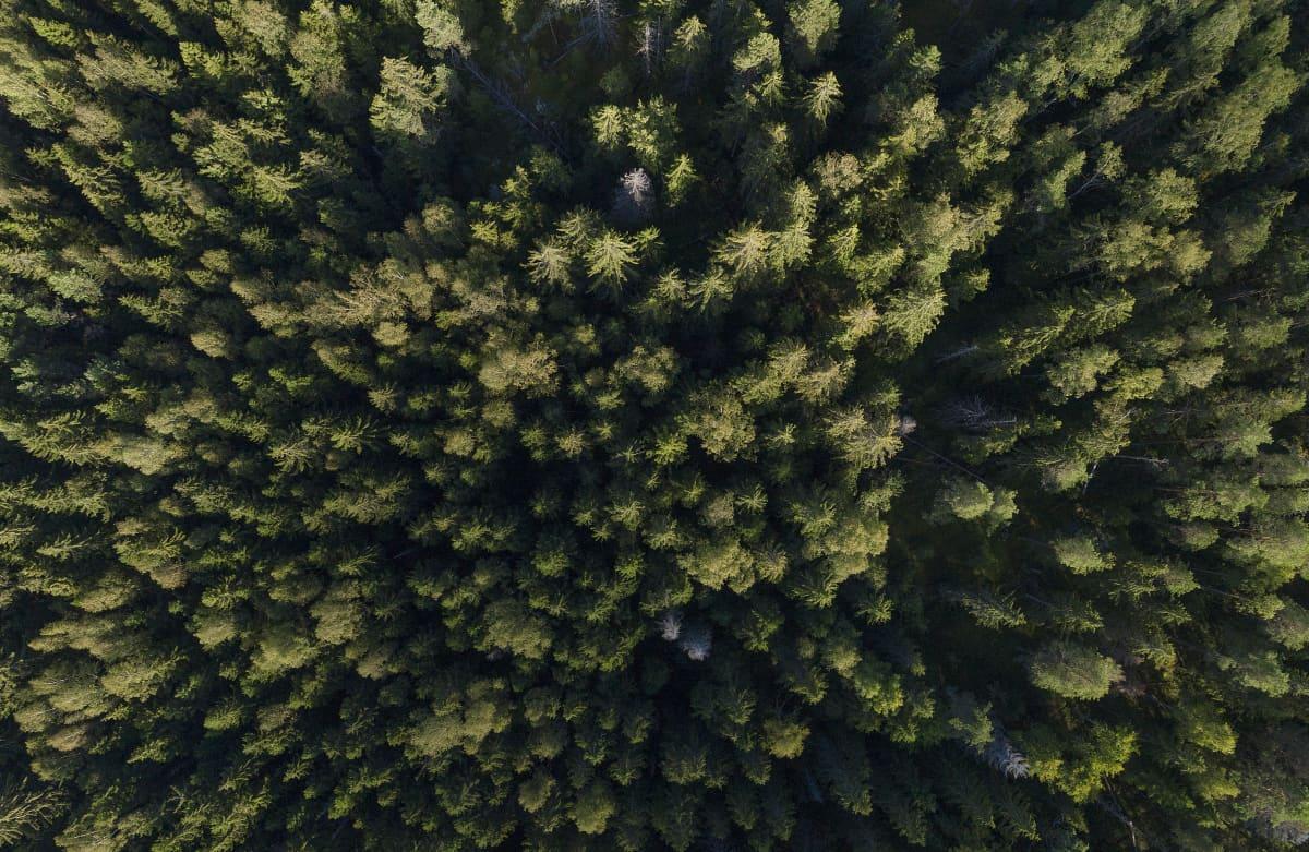 Metsää Sipoonkorven kansallispuistossa.
