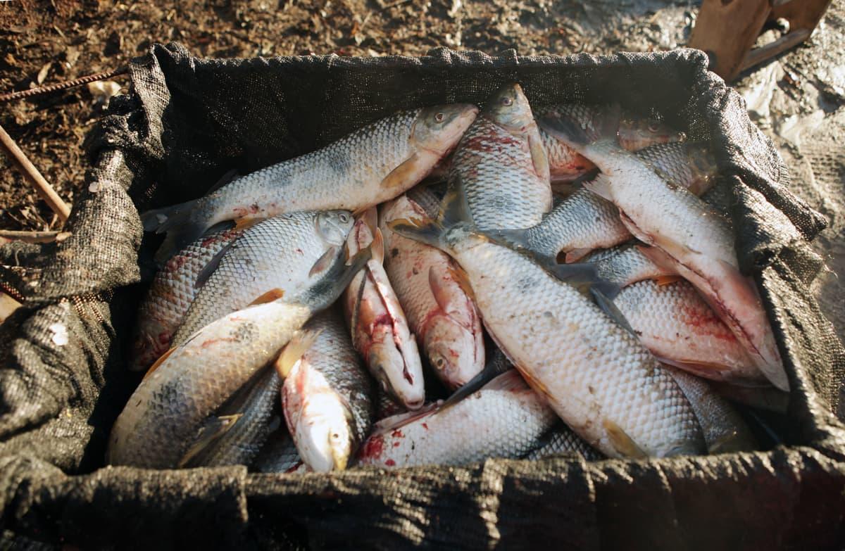 Vicente Rodriguezin kalasaalis lähtövalmiina.