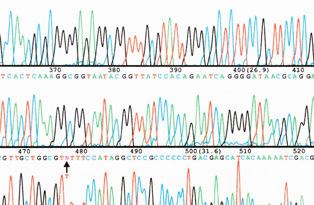 DNA-sekvenssiä kirjaimina ja käyräkuviona