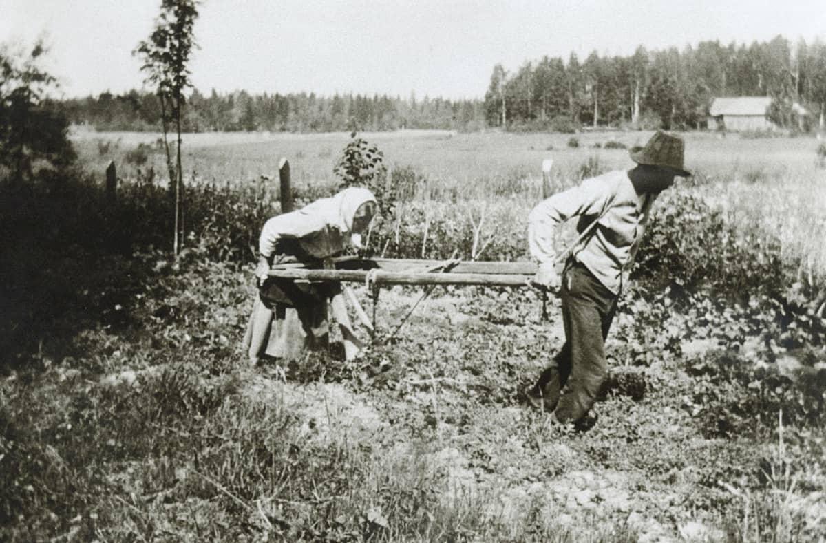 Nainen kyntää peltoa miehen vetämällä auralla.