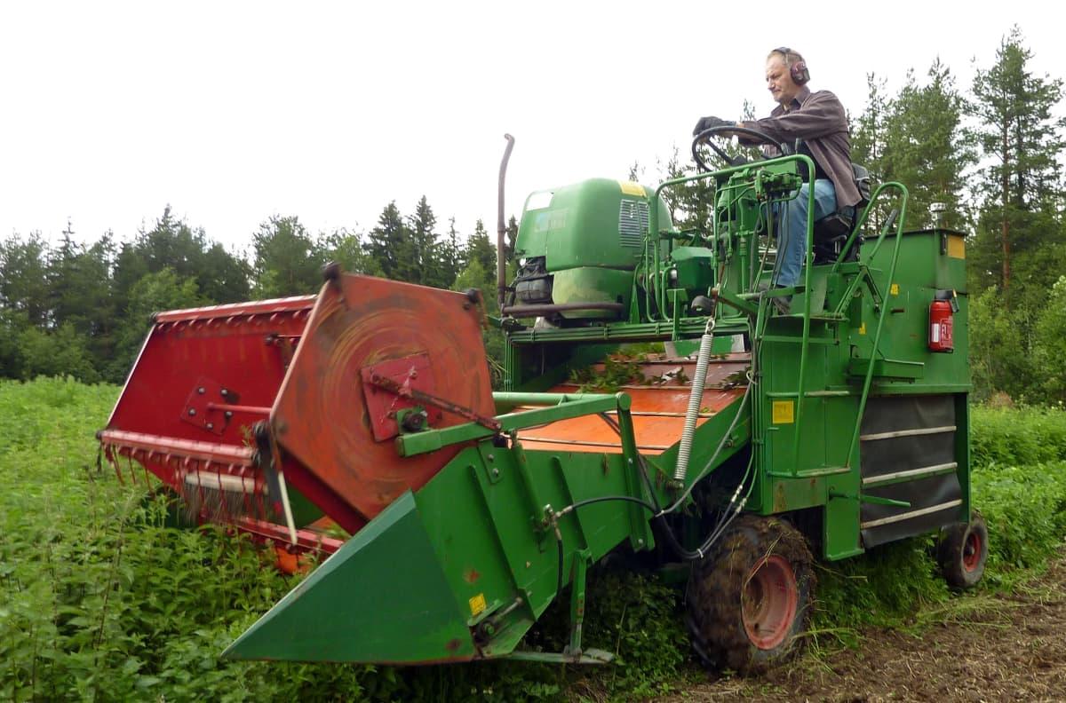Yrittäjä Matti Veijola ajaa nokkospuimuria.
