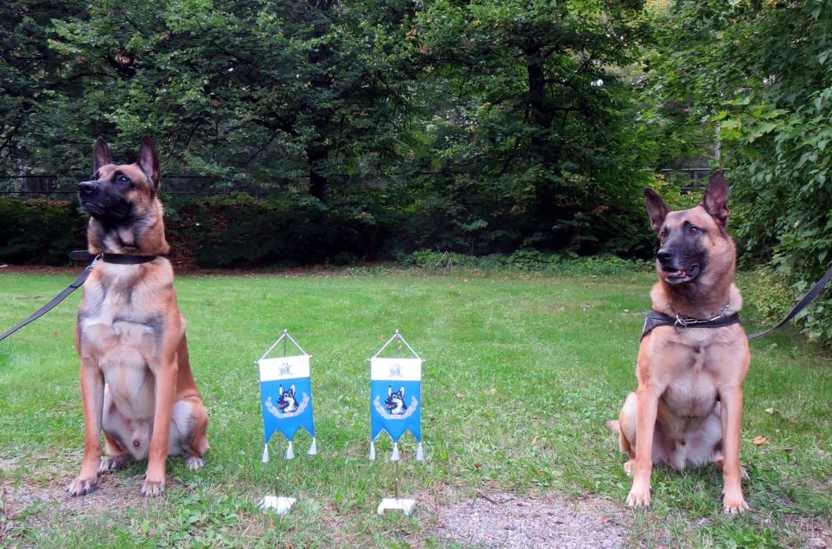Poliisikoirat Famo ja Pakki poseeraavat palkintoviiriensä vierellä.