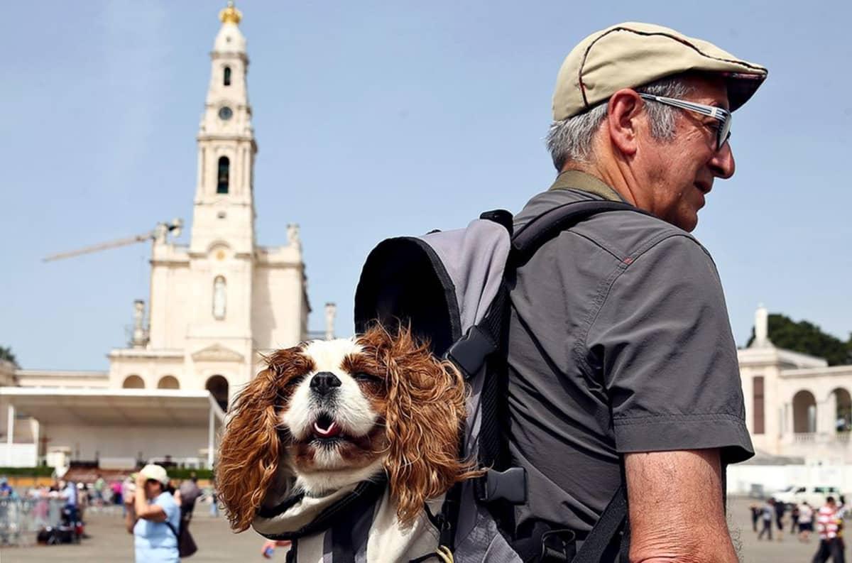 Mies ja koira.