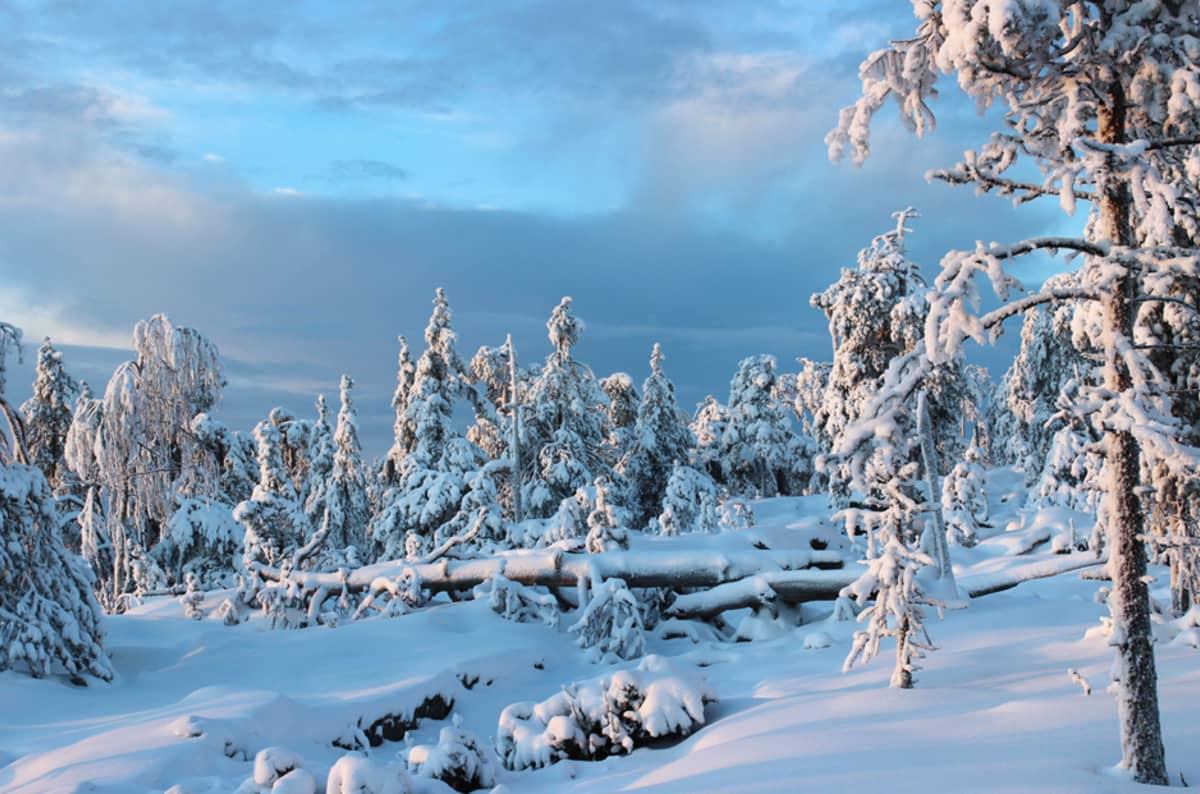 Talvinen Ounasvaara
