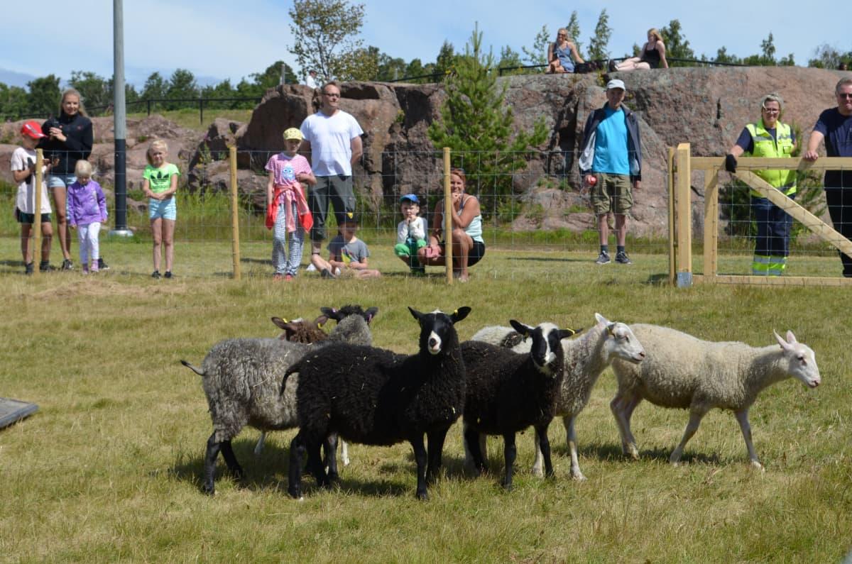 Lampaita aitauksessa puistossa ja ihmisiä aitauksen ympärillä.