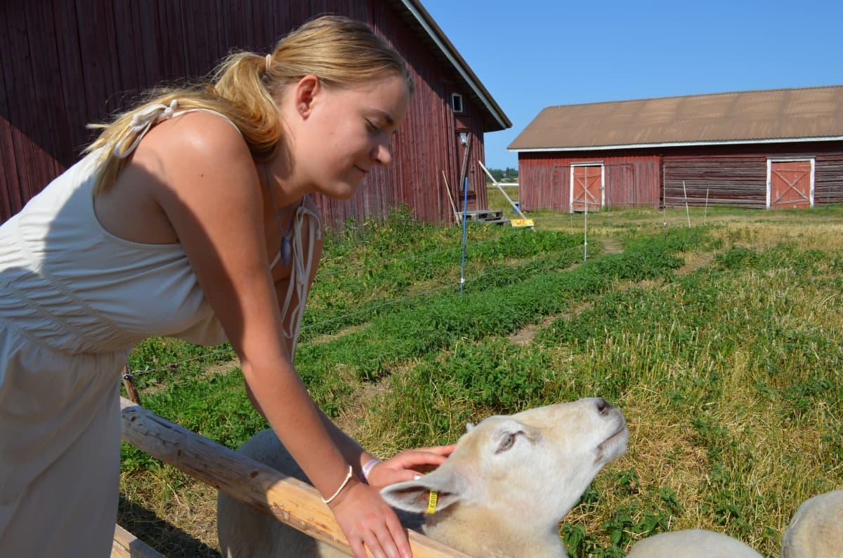 Nuori nainen rapsuttaa lammasta
