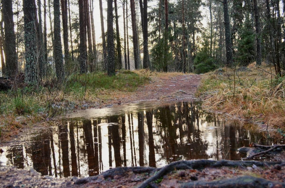 Vesi nousi polulle Ukissa.