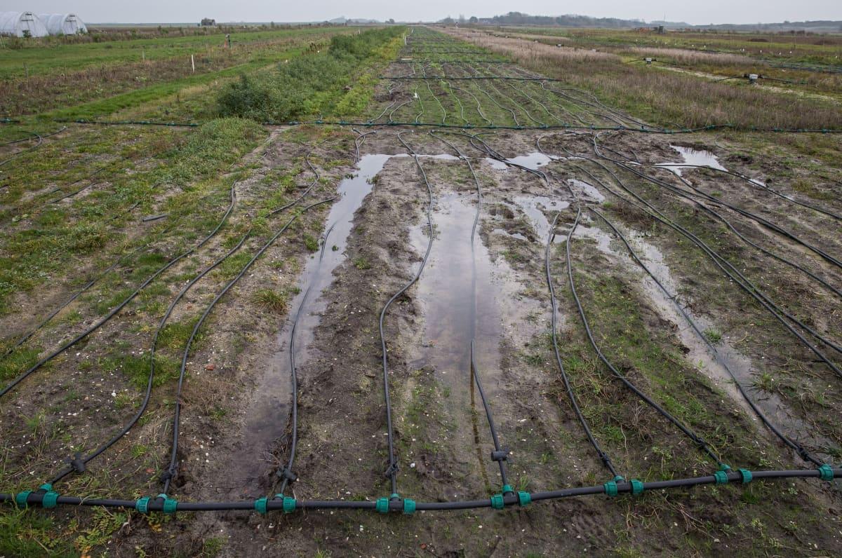 Koepelto kasteluletkuineen Texelin saarella Hollannissa.
