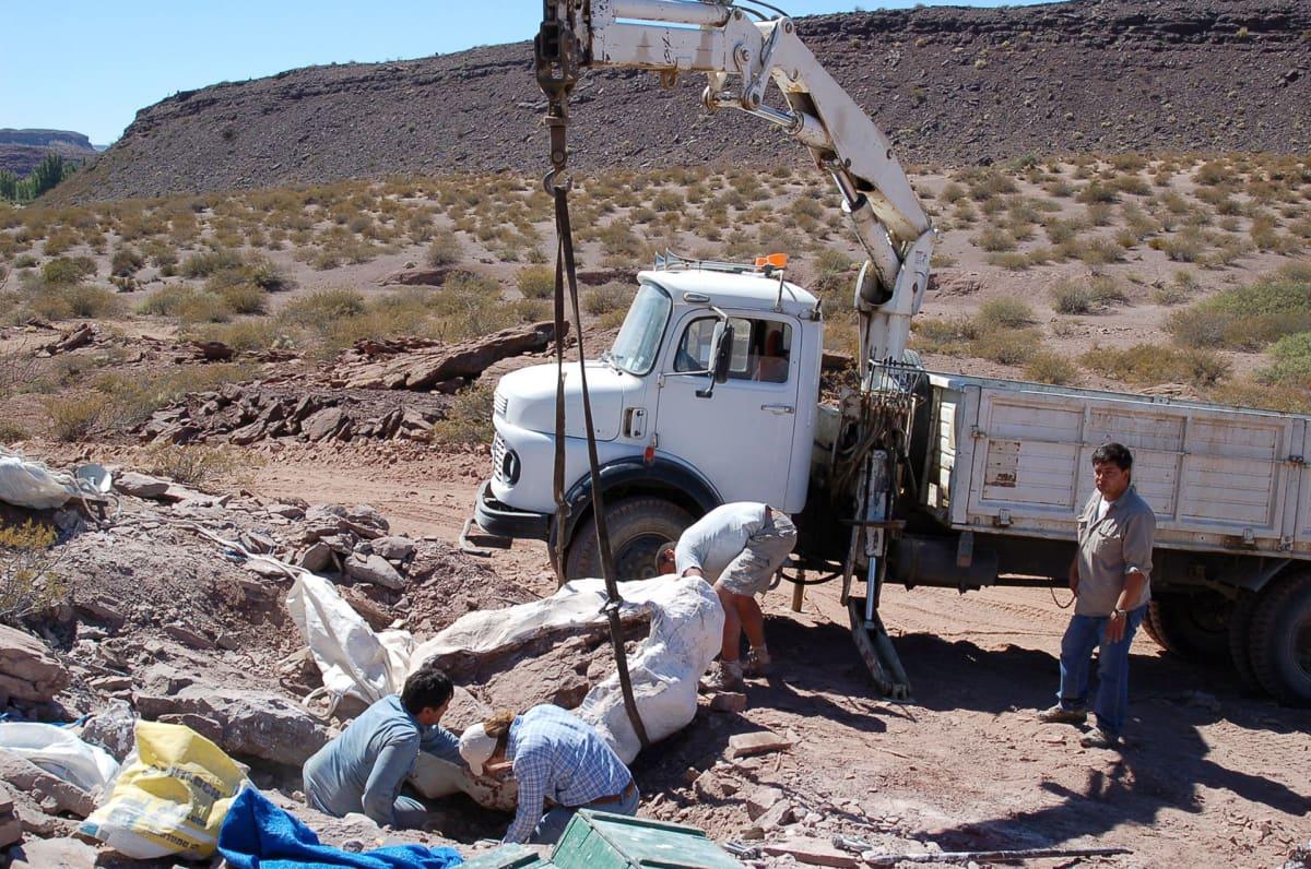 Dinosauruksen jäännettä nostetaan kuormauton lavalle.