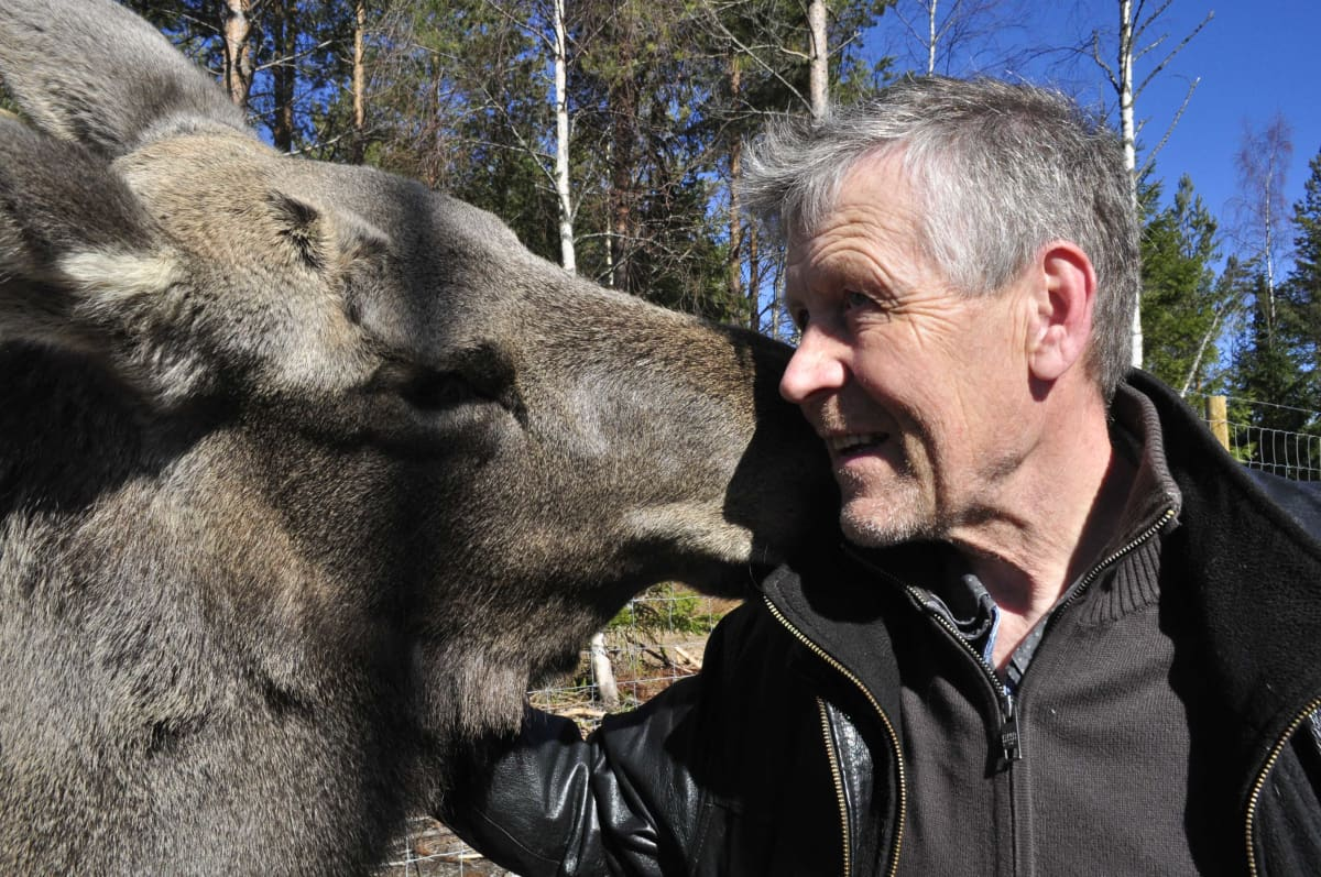 Mervi-hirvi ja Markku Harju