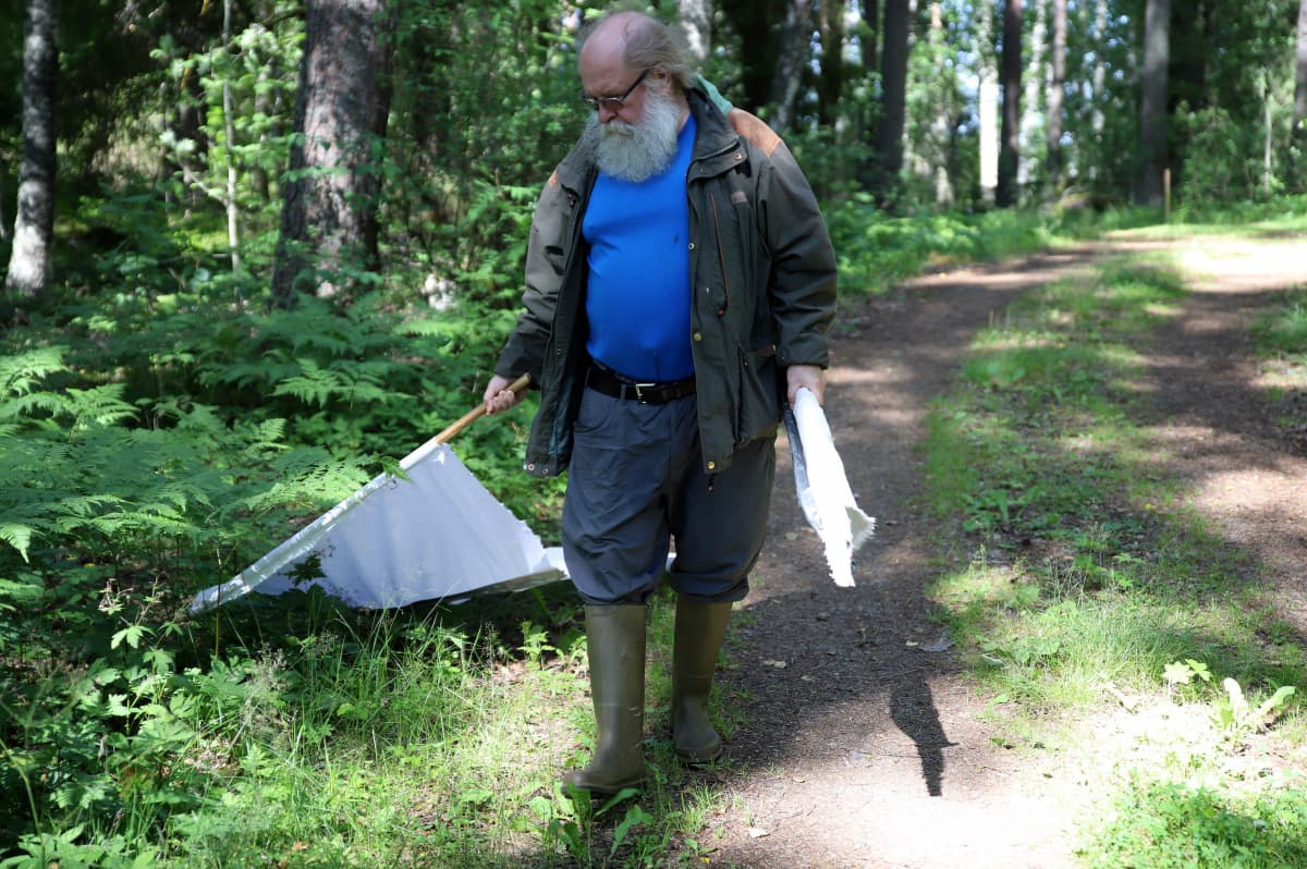 Metsäeläintieteen emeritiusprofessori Heikki Henttonen keräämässä punkkeja tutkimusalueeltaan Kuhmoisissa.