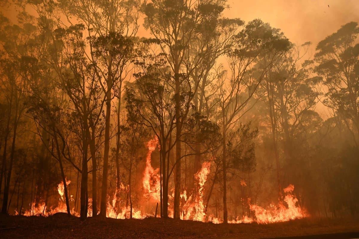 Maastopalot roihusivat lauantaina Batemans Bayssa Uudessa Etelä-Walesissa.
