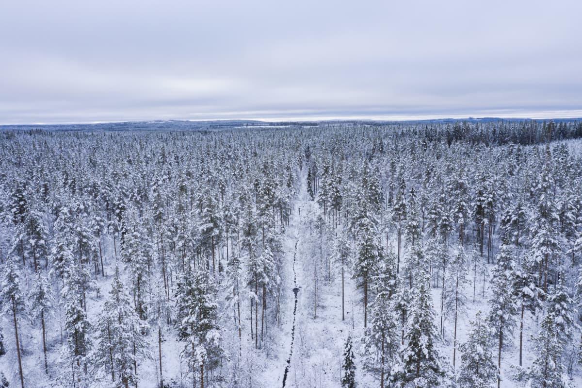 Sula suo-oja lumisessa suometsässä.