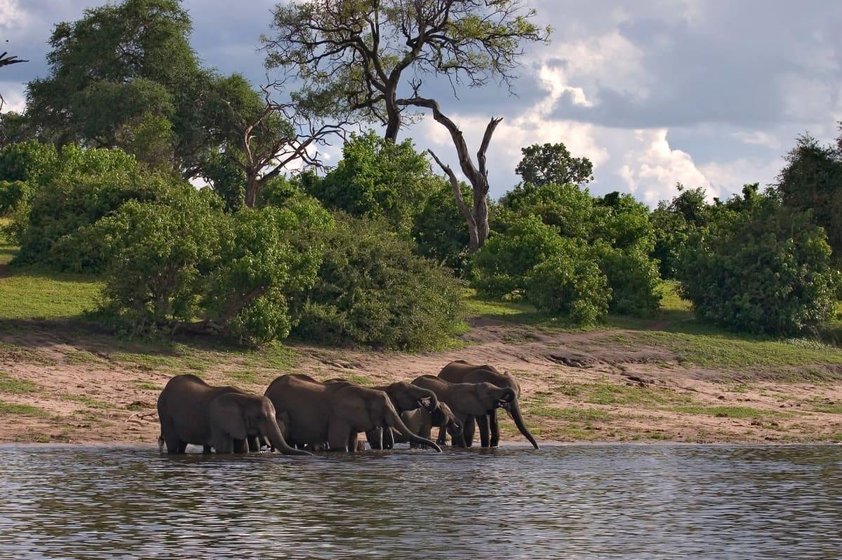 norsuja vedessä