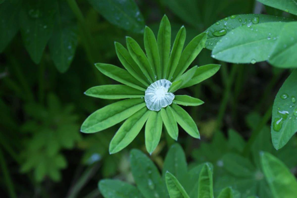 Vihreä lehti, jossa vesipisara