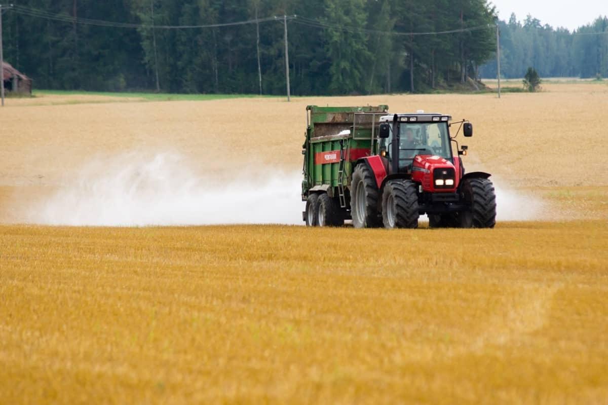 Kipsi, viljapelto, traktori, kipsin levitystä pellolle