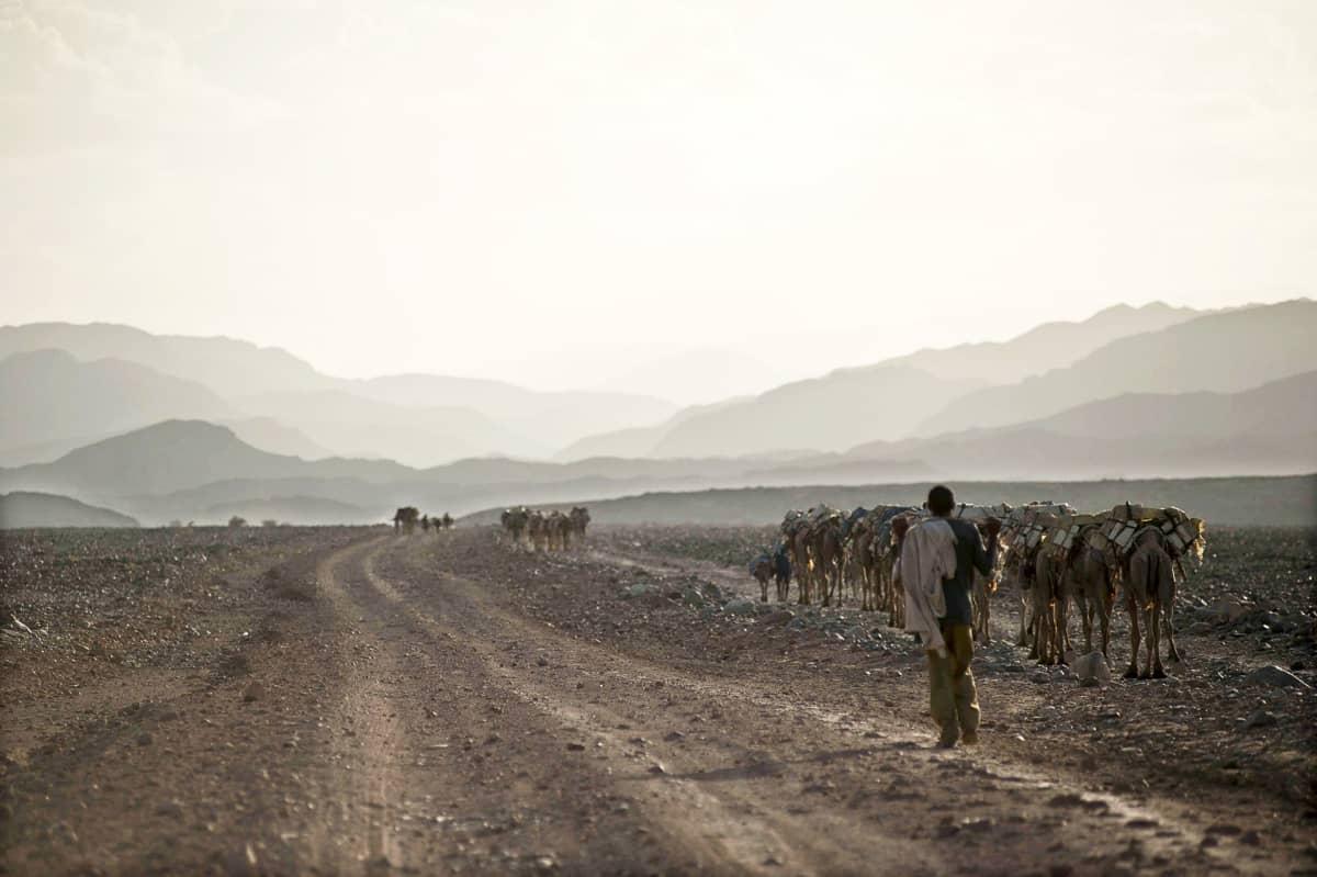 Kamelikaravaani Etiopian ja Eritrean rajaseudulla