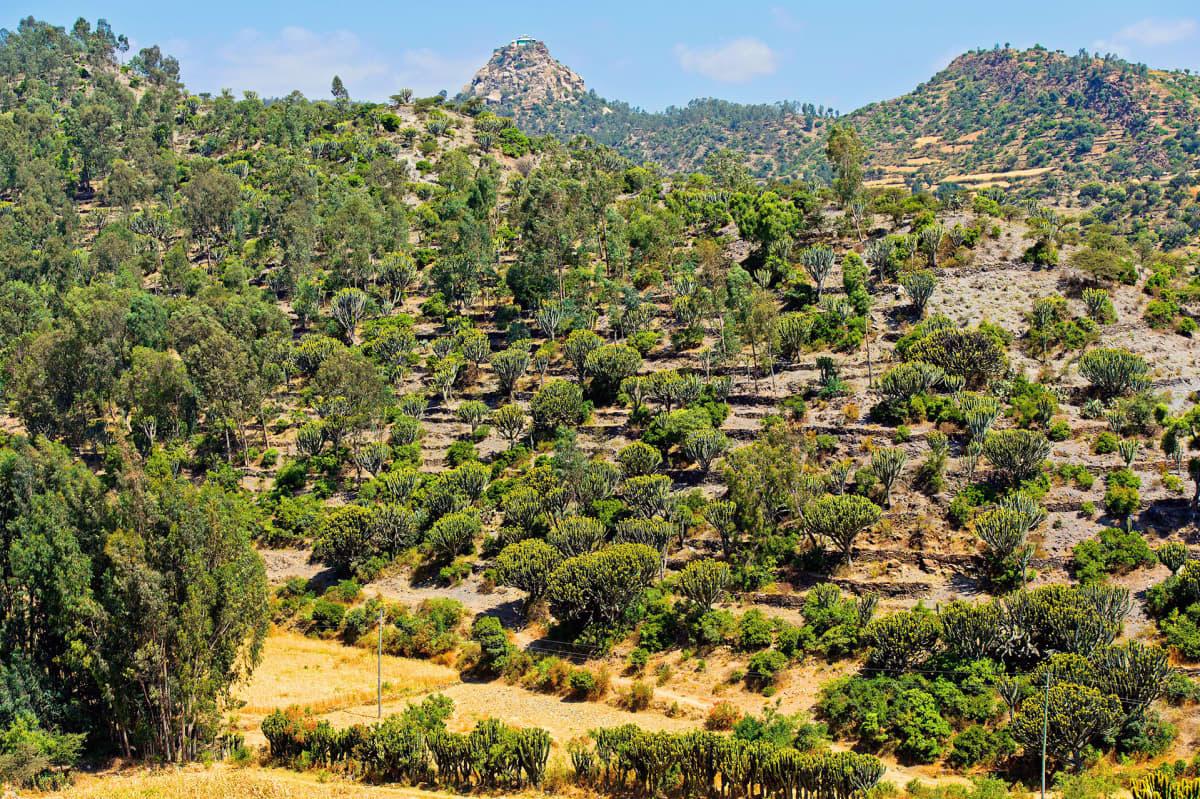 Jättityräkkejä Etiopiassa.