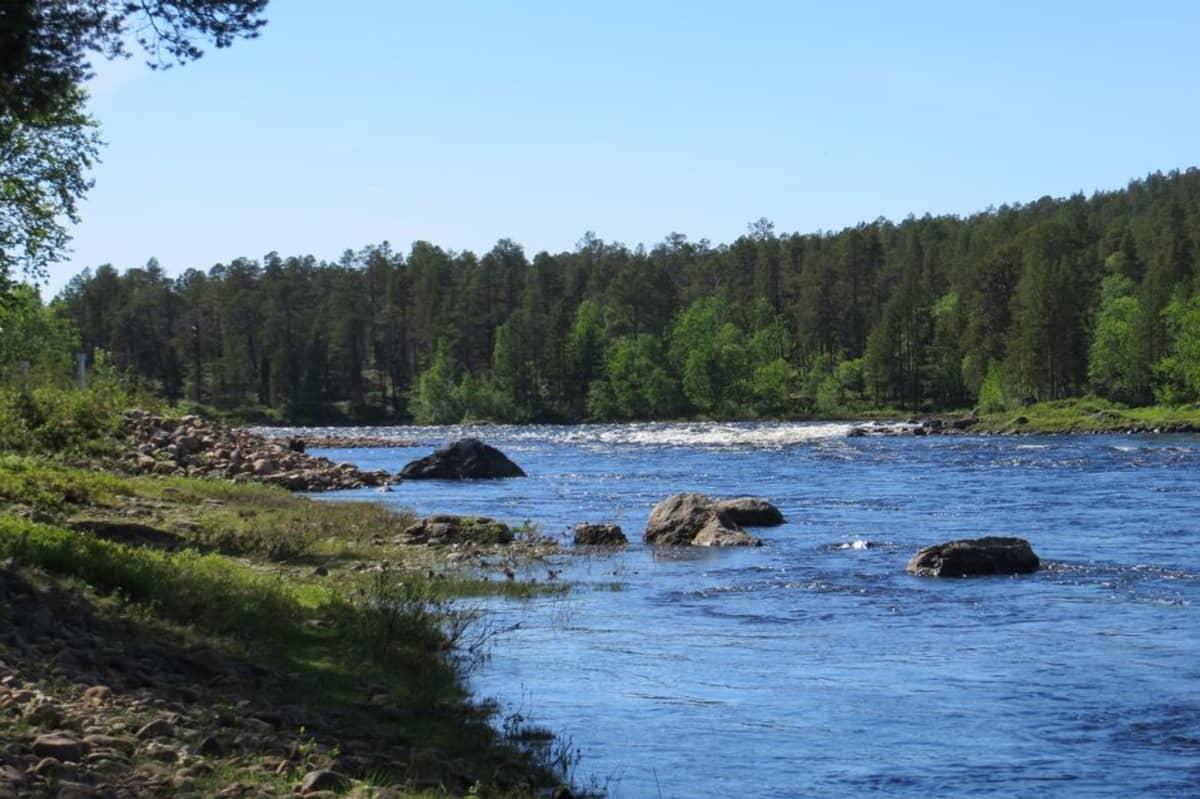 Inarinjärveen laskeva Juutuanjoki kuvattuna kesällä 2013.