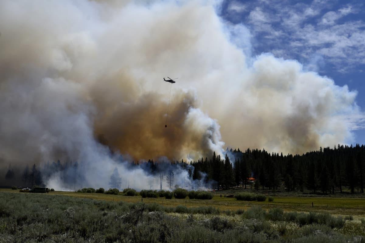 Helikopteri yrittää sammuttaa maastopaloa Kaliforniassa.