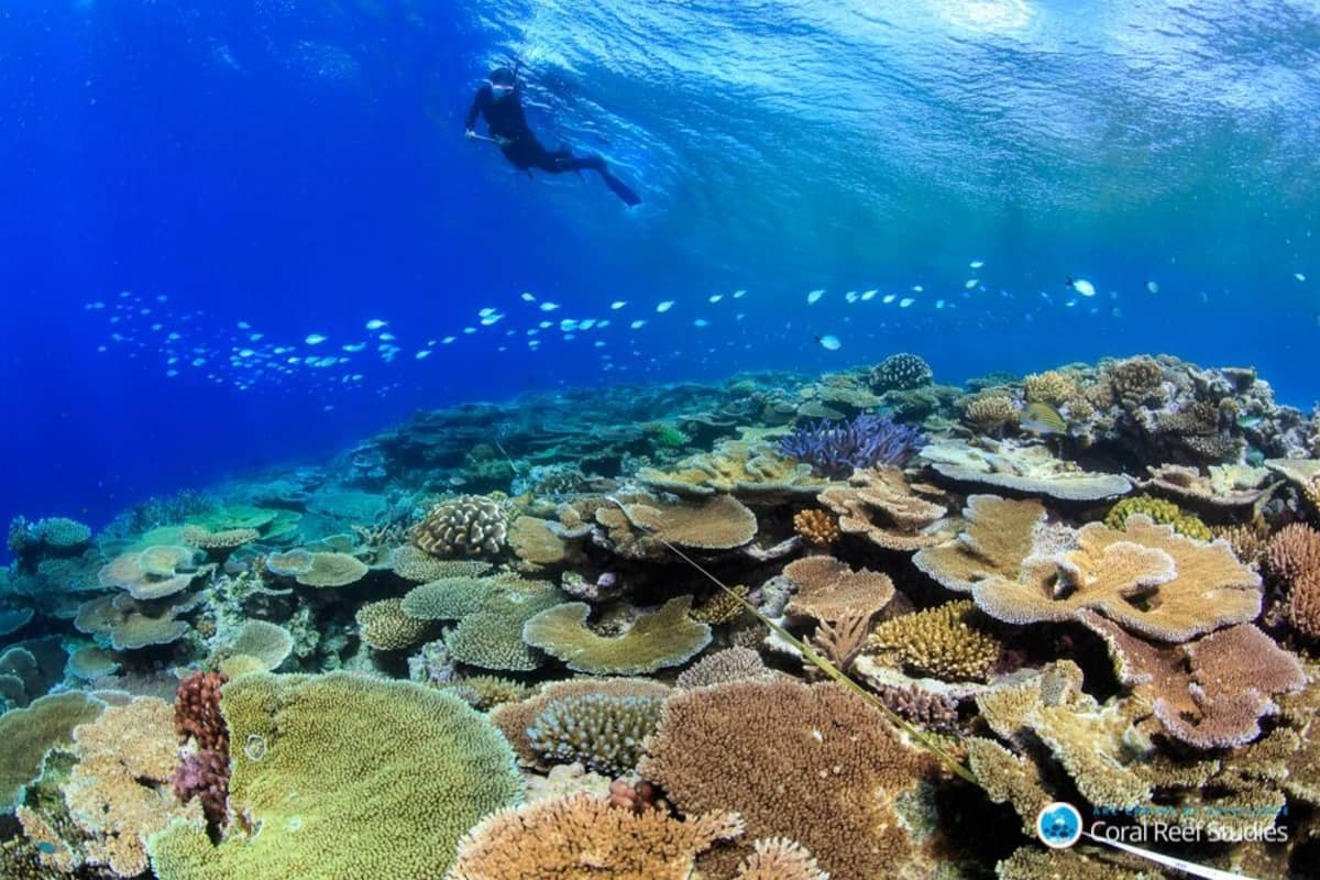 Sukeltaja ja kalaparvi koralliriutan yllä