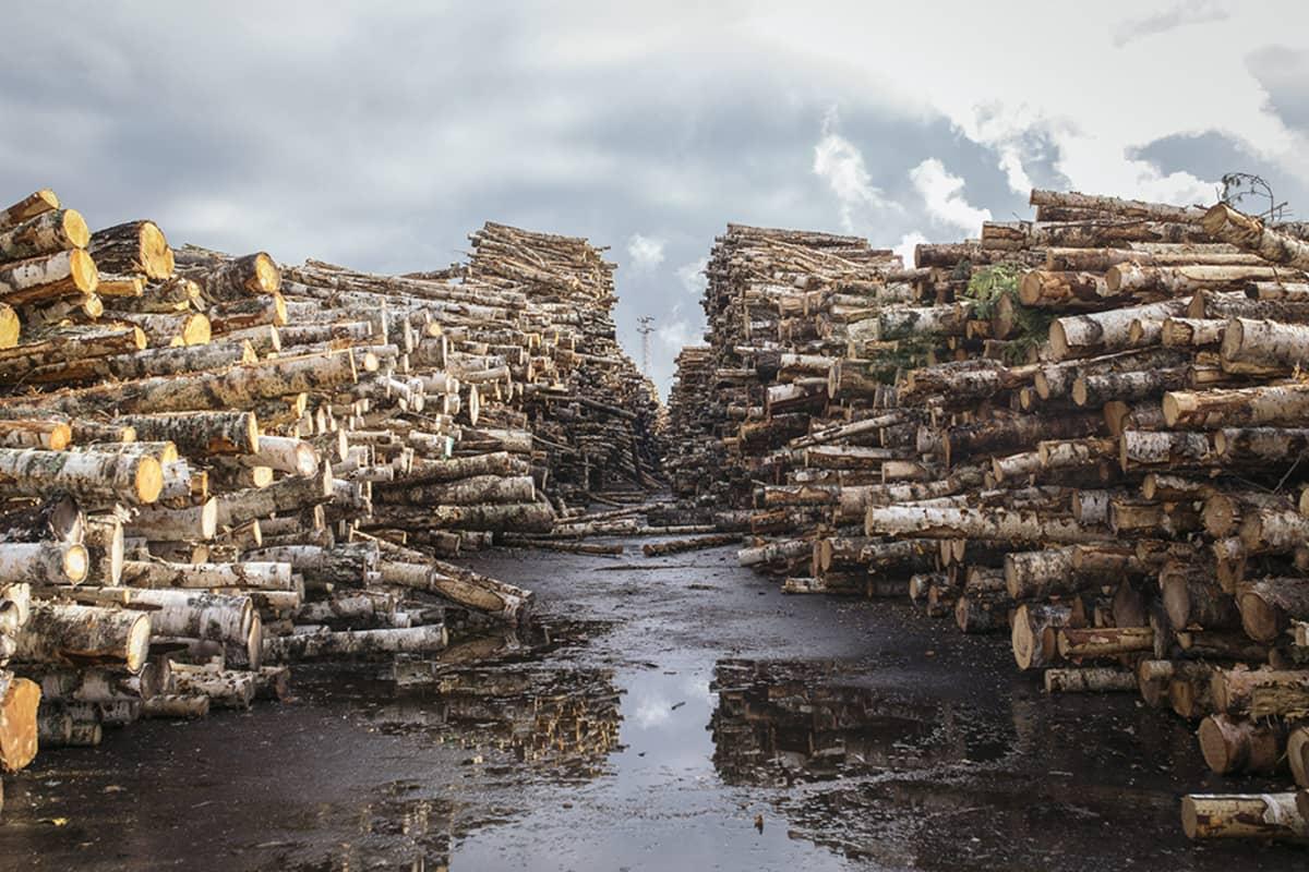Metsä Group esitteli biotehdasprojektiaan medialle Äänekoskella 9. lokakuuta 2014.