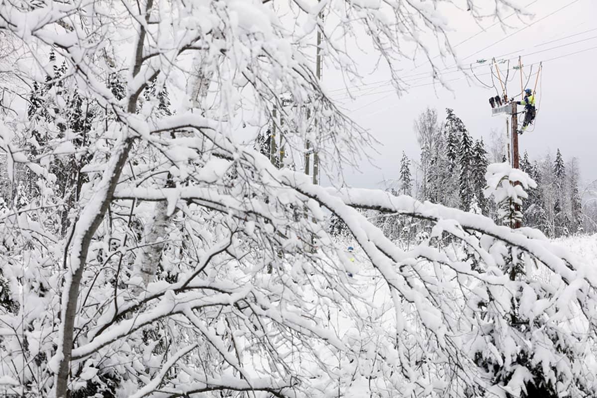 Sähköverkkoja kunnostettiin Keski-Suomessa maanantaina viikonlopun runsaiden lumisateiden ja sähkökatkojen jäljiltä.