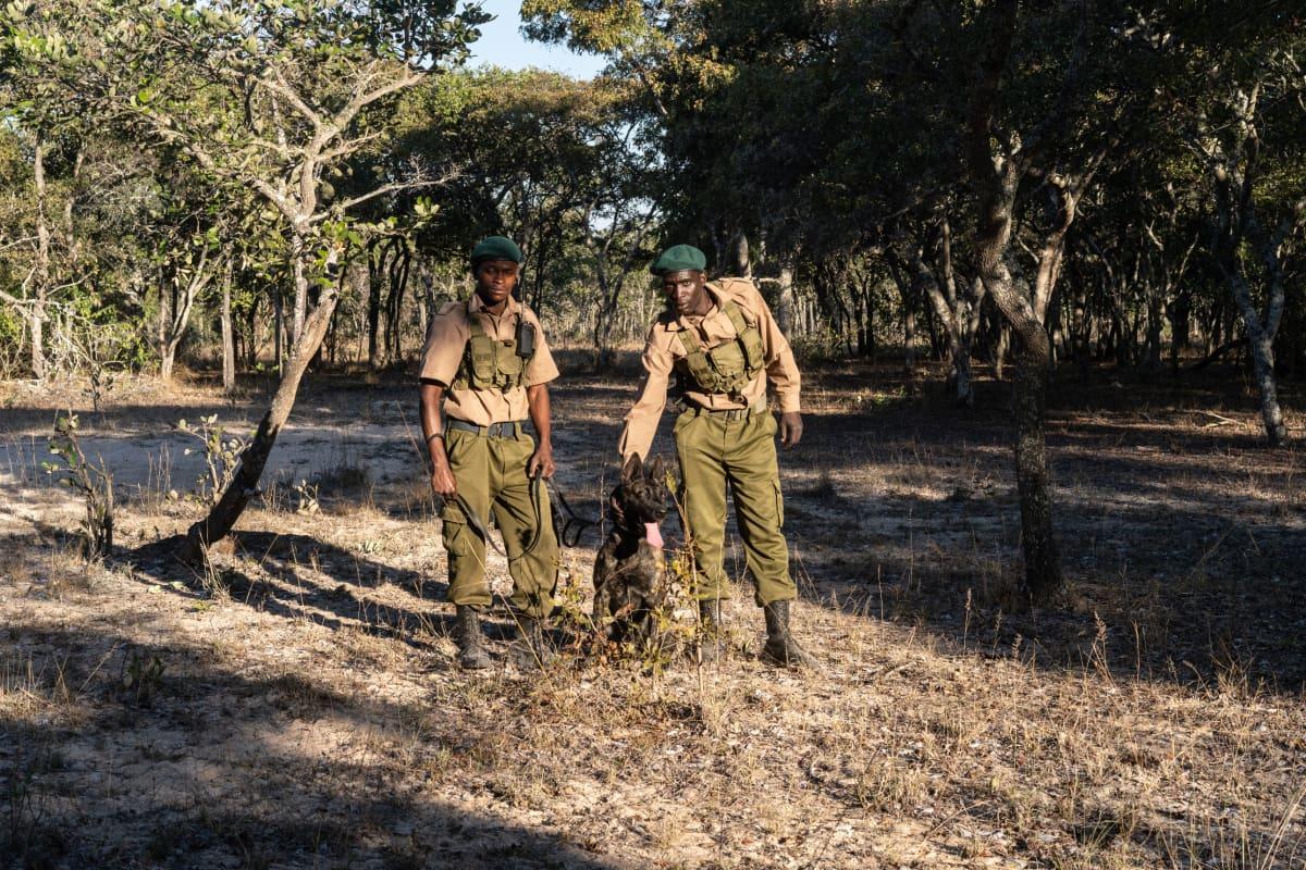 Murwi-koira kouluttajiensa kanssa.