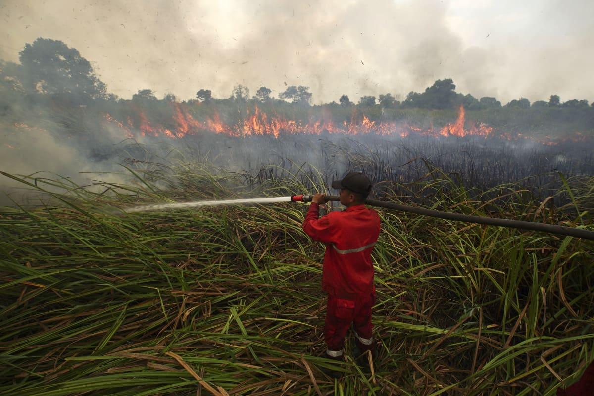 palomies sammuttaa metsäpaloa