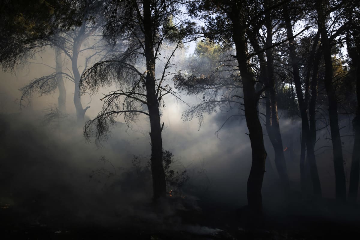 Paksua savua maastopalosta metsässä.