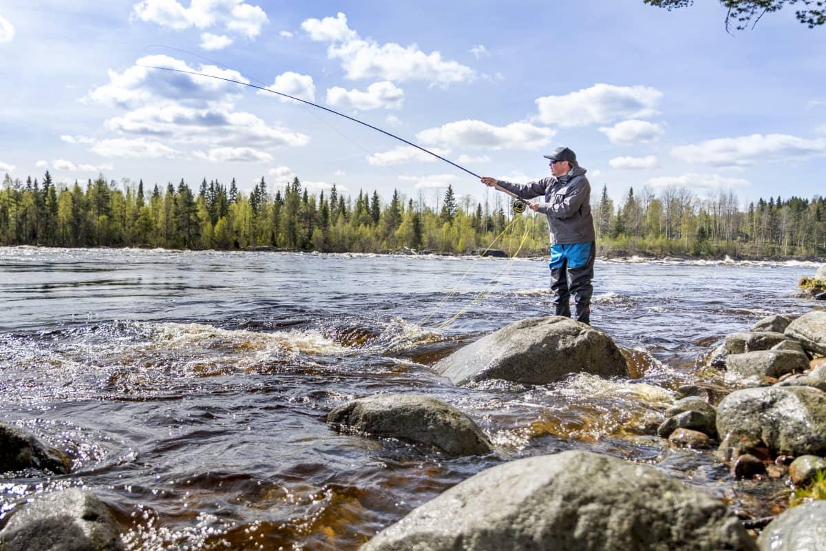 Kalastusmatkailija Janne Korhonen perhokalastamassa Tornionjoella Ylitorniolla