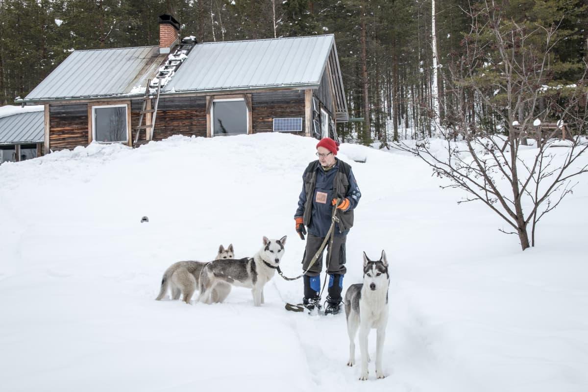 Matti Voipio koirien Saun, Alman ja Ykän kanssa.