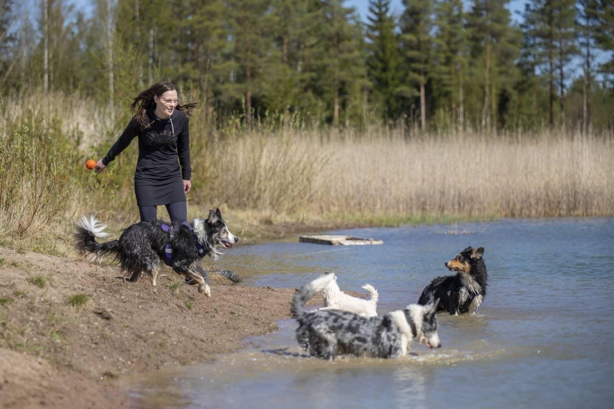 Tiina Kuusisto heittää veteen lelua neljälle koiralle.