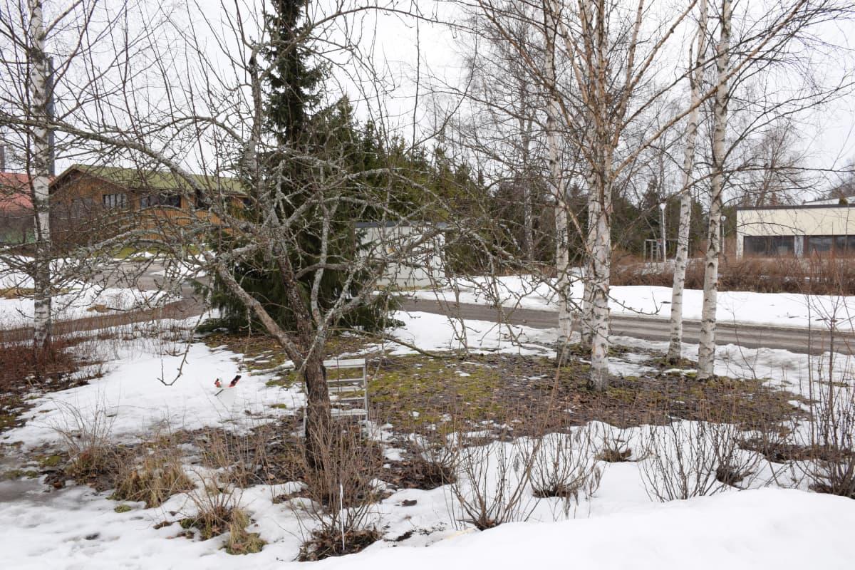 Omenapuu ja marjapensaita paljaana lumien sulamisen jälkeen.