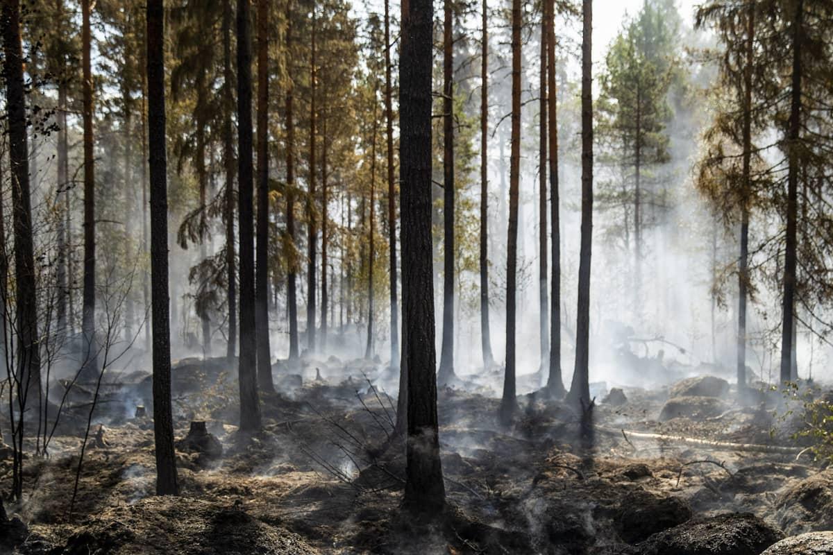 Pyhärannan metsäpalon jälkiä