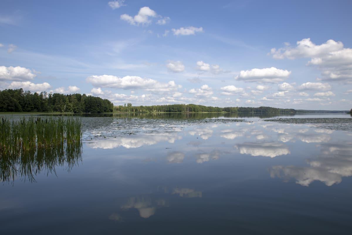 Vihdin Enäjärvestä on löydetty kuolleita simpukoita ja kaloja.