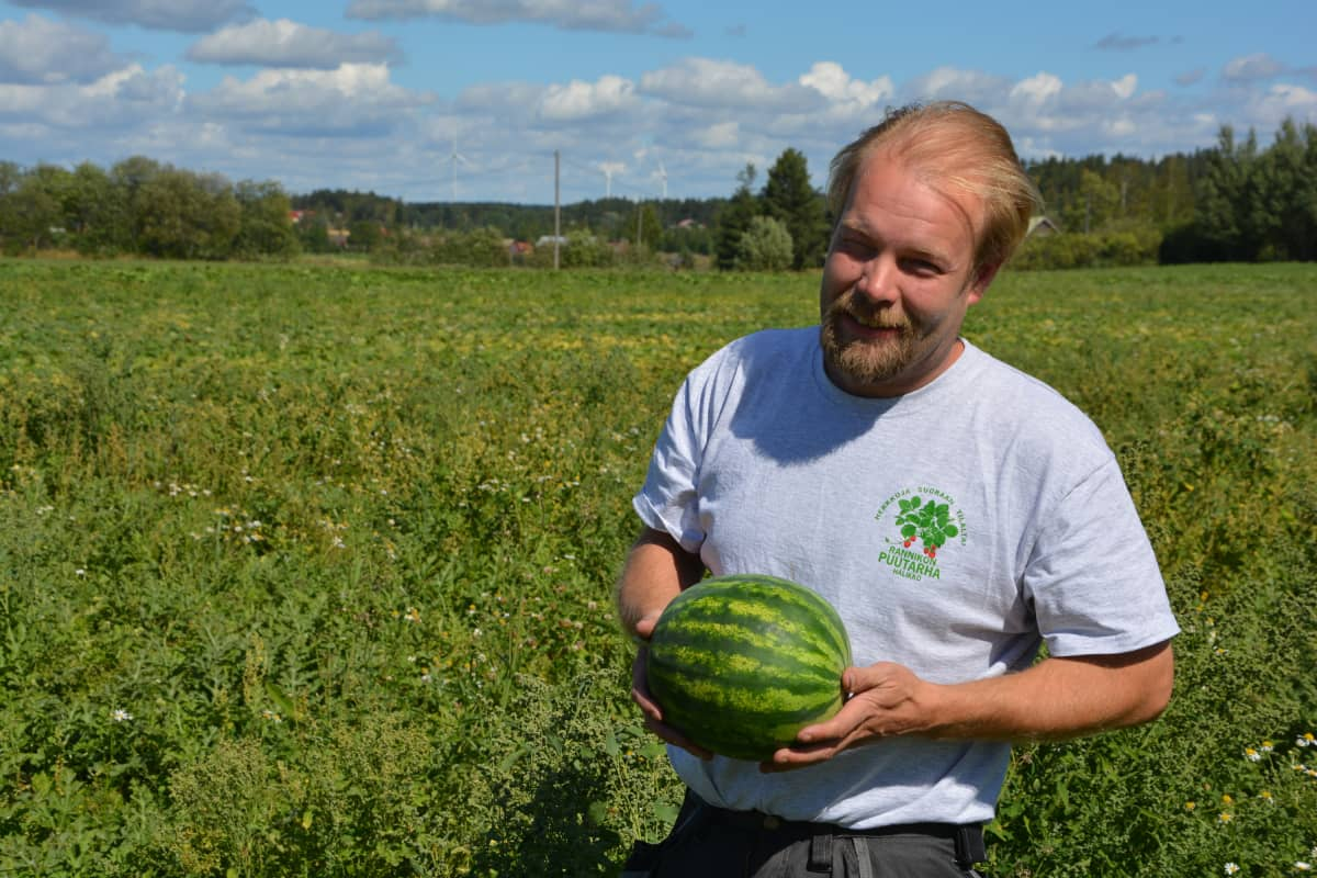 Rannikon puutarhan viljelijä Esa Rannikko vesimelonipellolla.
