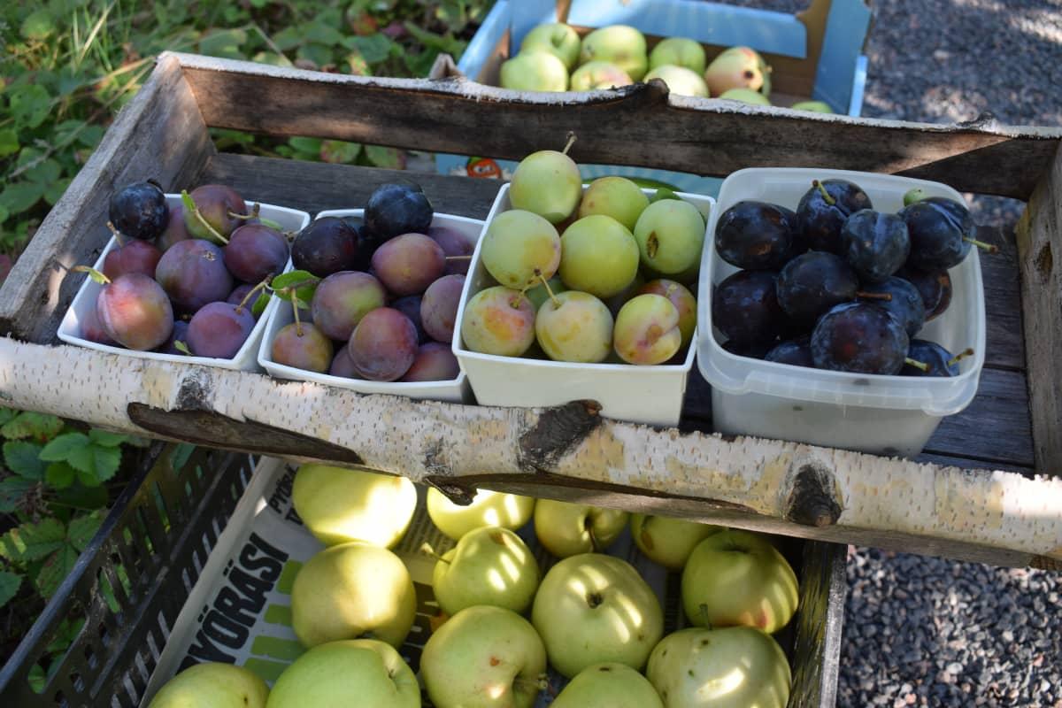 Luumuja ja omenoita